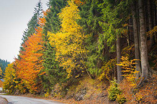 Trees, Autumn, Alley, Nature, Colors, Jizera Mountains