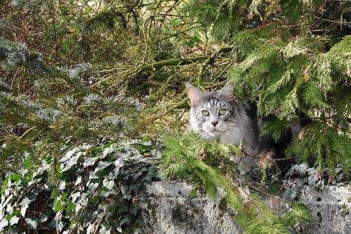 Cat, Cat In The Bush, Trees, Domestic Cat, Lurking
