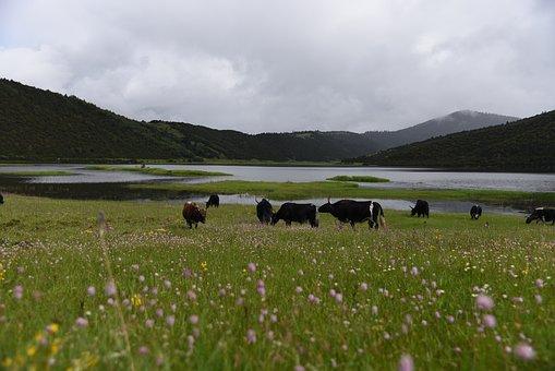 Tibet, Ecology, Drunk Oxygen