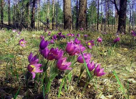 Flowers, Phlomis, Forest, Nature, Easter Flower
