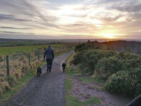 Ireland, Dogs, Walking, Man, Sunset, Giant's Causeway