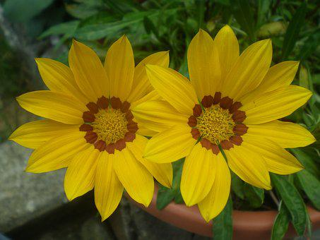 Valentine Day, Flower, Green, Yellow, Phytotherapy