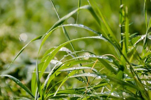 Grass, A Grass, Dew, Blade Of Grass, Nature, Green
