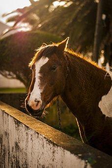 Horse, Animal, Field, Farm, Haras, Animals, Nature, Eye