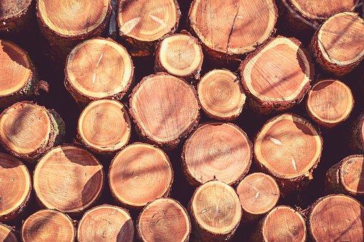 Wood, Strain, Tree, Bark, Trunk, Rings, Old, Losers