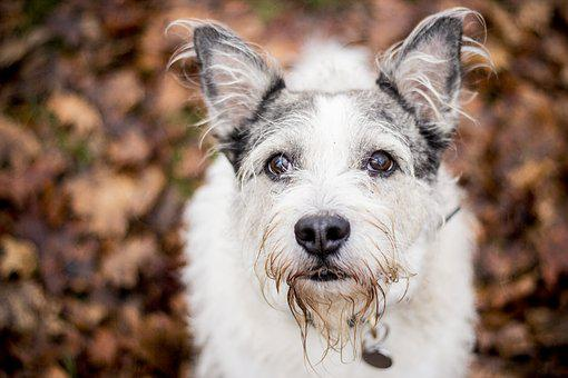 Dog, Animal, Mazel, Canine, Cute, Pet, Outdoors