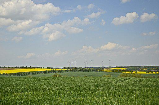 Fields, Reported, Oilseed Rape, Nature, Landscape