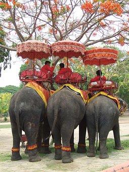 Elephant, Thailand, Pachyderm, Asia, Mahout, Break