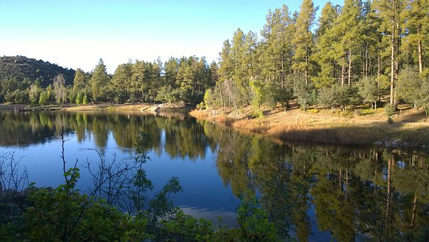 Lake, United States, Chill, Trees, Plants, Coniferous