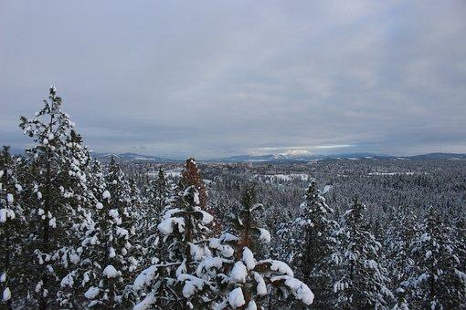 Washington, Spokane, Snow, Trees, Nature, Outdoors