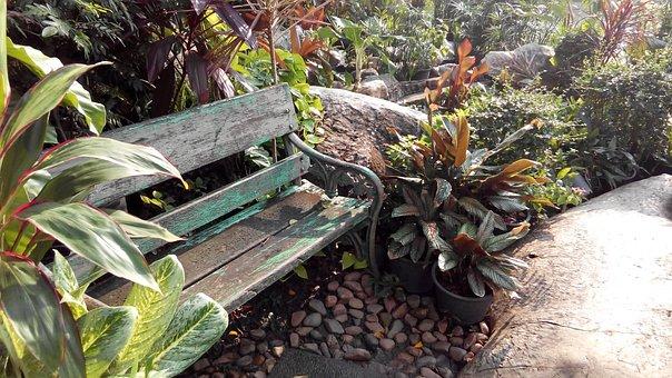 Garden, Bench, Relax, Tree, Happiness, Outdoor