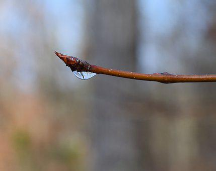 Raindrops On Branch, Rain, Branch, Twig, Tree, Plant