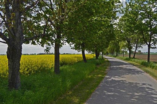 Avenue, Oilseed Rape, Trees, Road, Fields, Spring