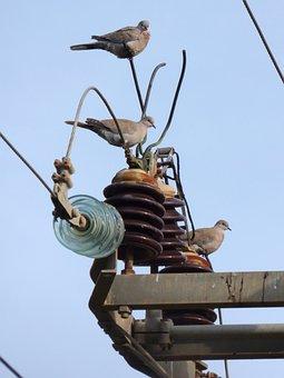 Turtledove, Transformer, Power Line, Insulators, Danger