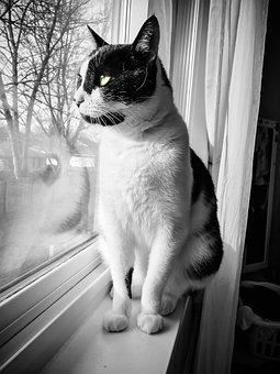 Cat, Window, Pet, Animal, White, Cute, Kitten, Kitty