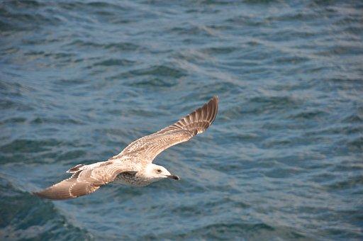 Istanbul, Estuary, Turkey, Boat, Nature, Morning