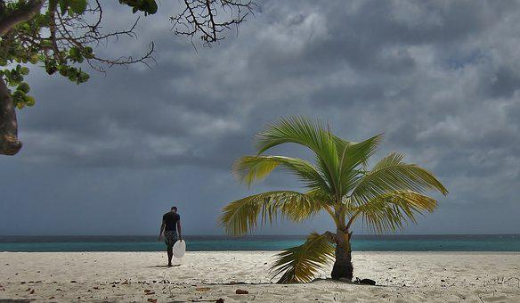 Aruba, Palm Tree, Surfer, Surfing, Beach