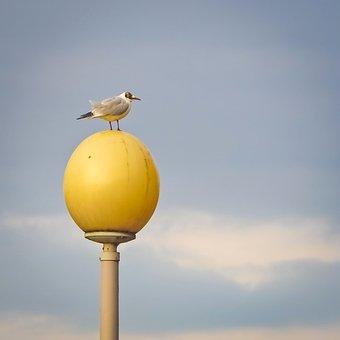 Seagull, Bird, Water Bird, Animal, Close, Seevogel