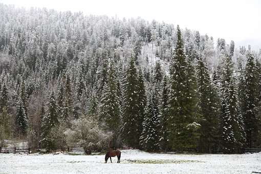 Early Snow, Morning In The Forest, Lonely Horse, Snow