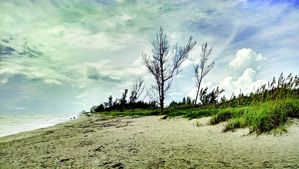 Beach, Sand, Florida, Tree, Dune, Trees, Sea Oats