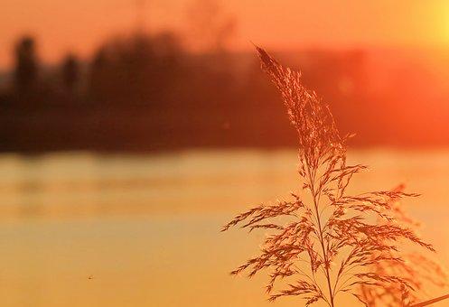 Sunset, Abendrot Bullrushes, Lake, Trees, Silhouette