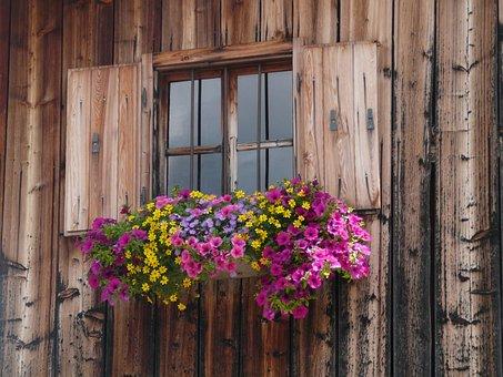 Finestra, Rifugio, Alpi, Austria Fiori, Shelter, Window
