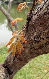 Autumn Leaves, Tree, Green, Nature, Treetops, Garden