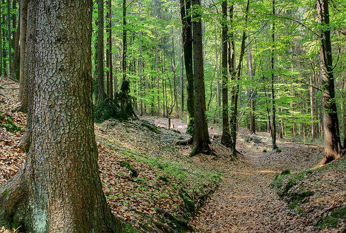 Forest, Spring, Nature, Beech, Tree, Green, Maiwald