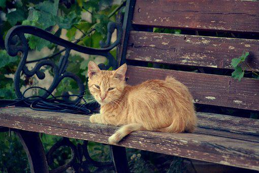 Kitten On A Bench, Cat Looking At Me, Pet, Animal, Cat