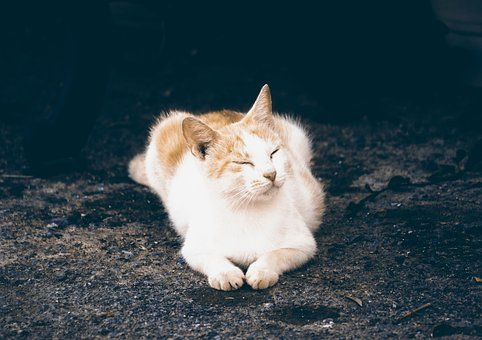 Kitten Sleeping, Cat, Pet, Cute, Fluffy, Animal