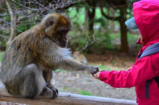 Monkey, Child, Animal, Friendship, Parts, Trust