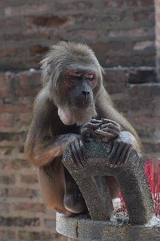 Animal, Feeding Monkeys, Chau Thoi
