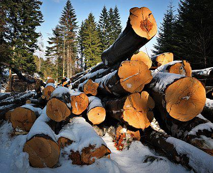 Wood, Mountains, Beeches, Fuel, Bale, Tree, Felling