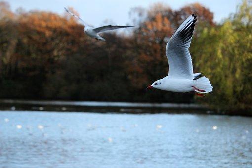 Bird, Flying, Seagull, Nature, Animal, Photography