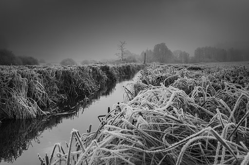 Winter, Frost, Wintry, Snow, Winter Magic, Tree, Fog