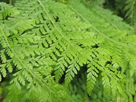 Leaf, Foliage, Nature, Green Leaves, Green, Plant