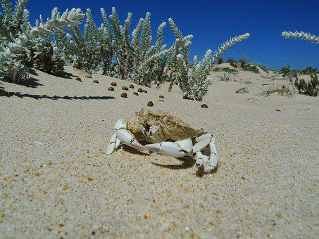 Sand, White, Crab, Island, Sun, Summer, Nature, Shore