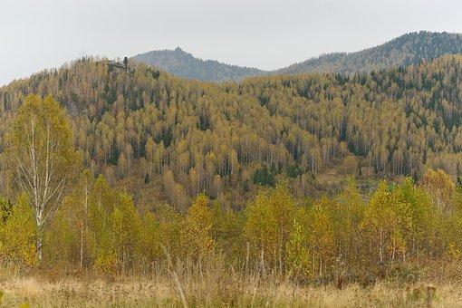 Autumn, Mountains, Landscape, Day, Nature, Trees