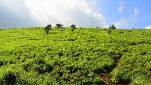 Hillock, Lemon Grass, Sky, Landscape, Kerala, India