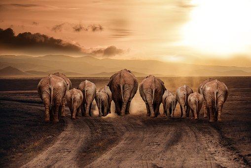 Elephant, Dust, Road, Africa, Savannah, Sun, Earth