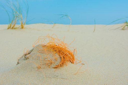Borkum, Beach, North Sea, Flotsam