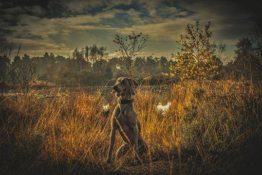 Dog, Animal, Cute, Pet, Breed, Adorable, Friend, Young