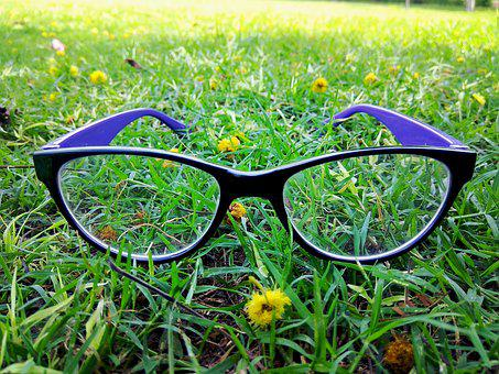 Eyeglass, Eyewear, Greenery, Product, Photoshoot