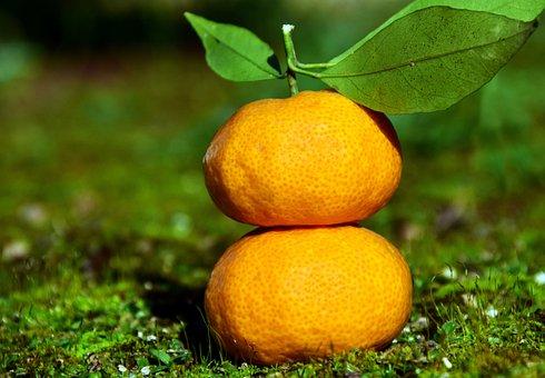 Tangerines, Citrus Fruits, Fruit, Food, Delicious
