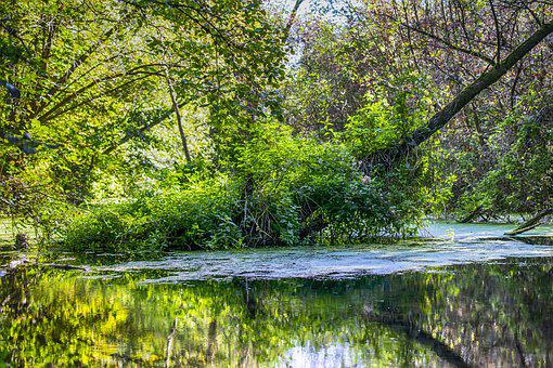 Swamp, Moor, Spring, Bright, Green, Nature Reserve
