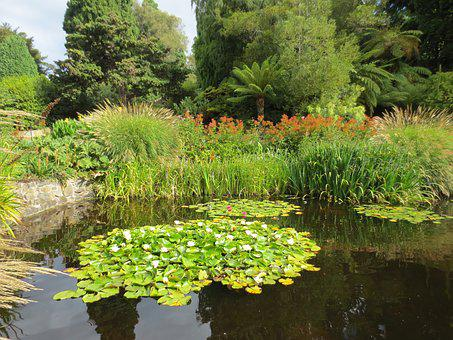 Lily Pond, Waterlilies, Pond, Water, Nature, Lily