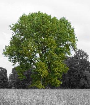 Tree, Green, Black White, Nature, Old Tree, Log, Park