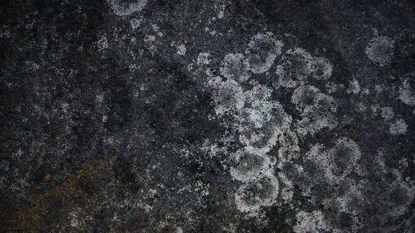 Dry Moss, Moss Stain, Texture, Moss, Rough, Surface