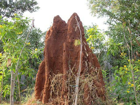 Termite, Ant, Termite Hill, Ant Hill, Insect, Nature