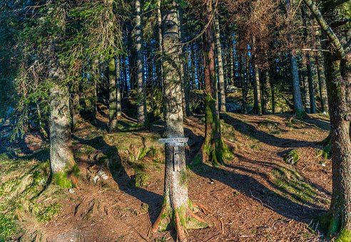 Norway, Bergen, Floyen, Nature Sign, Landscape, Nature
